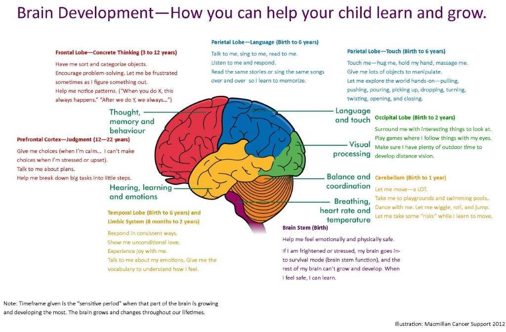 Early-Brain-Development (002) (002)